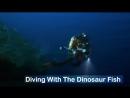 Погружение с Динозавром 2014 Discovery /Avaros/