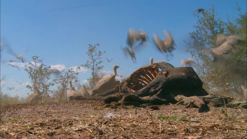 BBC: Мир с высоты птичьего полета - Африка (2011-2012) HD 720