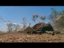 BBC Мир с высоты птичьего полета Африка 2011 2012 HD 720