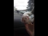 Свободу хомякам (VIDEO ВАРЕНЬЕ)