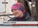 Лейкоз у коров Новости 24 01 2018 GuberniaTV