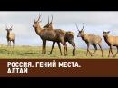 Алтай. Россия. Гений места 🌏 Моя Планета