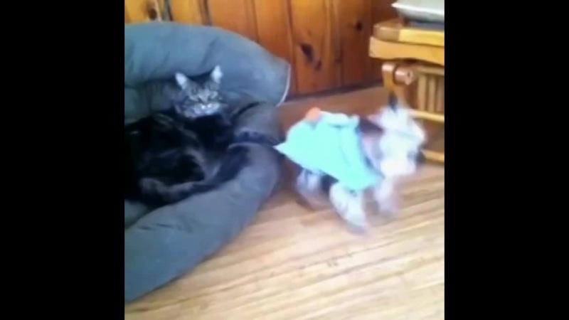 Cats R jerks 