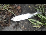 Fishing on Neva river 25.09.2013 Рыбалка на Неве