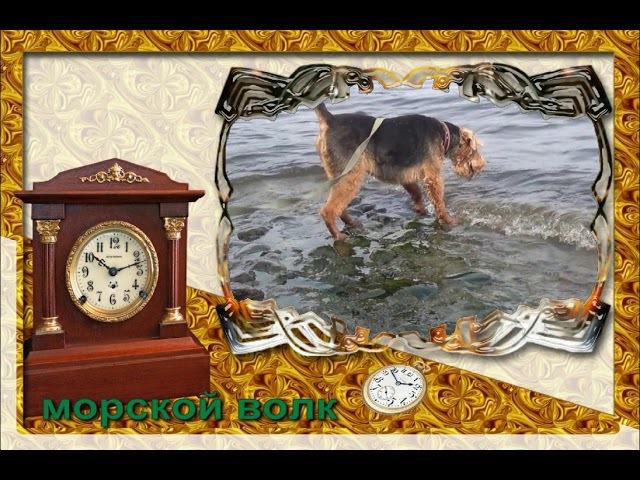 Видео открытка морской волк