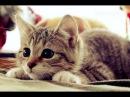 поющие разговаривающие коты и собака❤❤❤