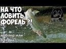 Русская Рыбалка 4 На что лучше ловить форель Воблеры или блесны