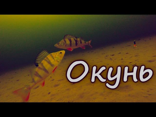 Окунь. Ловля на две мормышки зимой. Подводная камера. Зимняя рыбалка