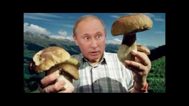 ПУТИН вводит в России налог насбор грибов иягод 2018