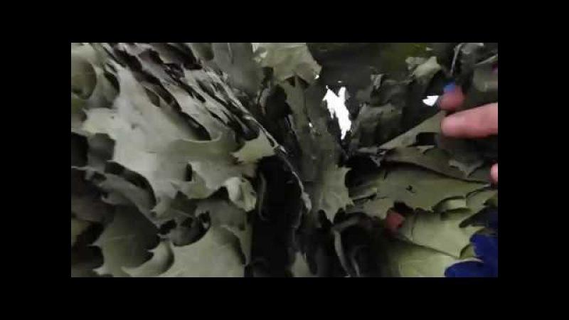 Канадский дуб