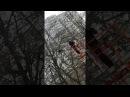 Спасение грача с дерева в Воронеже
