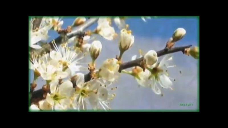 Весна муз В Нагавкина исп ОКОЛИЦА сол А Щербань автор ролика В Бондарева