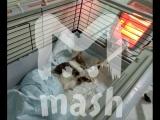 В калининградский приют для животных подкинули кота в монтажной пене