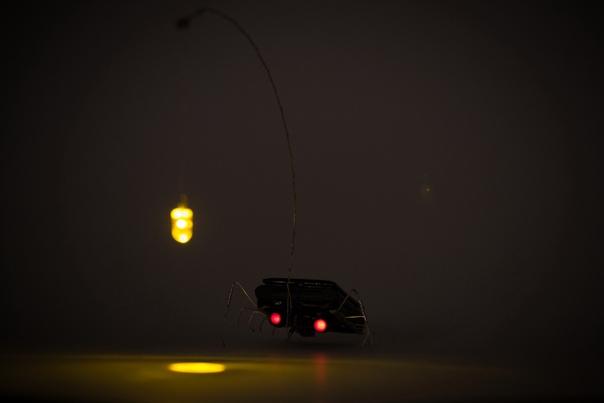 Удильщик - просто заряжается днём и приманивает насекомых на свою удочку ночью. И смотрит на них мерцающими красными глазами...