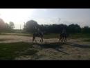 я и конь Вестрн