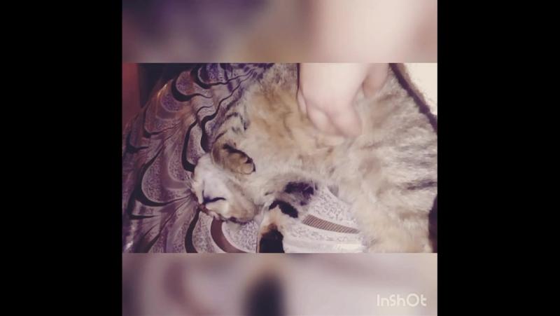 Мой котик любимый Барон