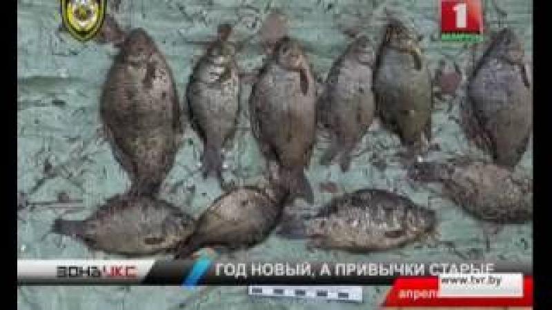 Бесчинства браконьеров в начале нового года. Зона Х