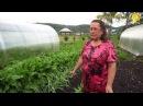 Совет ленивой огородницы: не поливать и не кормить сорняки!