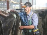 Диагностика беременности у коров с помощью ультразвукового сканера с очками Diagn