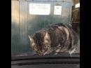 Кот не доволен восстанием машин из пепла
