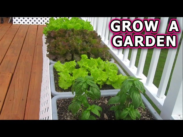 СУПЕР ФИЛЬМ... АМЕРИКАНСКИЙ ОГОРОД...How to Grow a Container Garden from Seeds Vegetable Plant Start Seed Raw Organic Patio Gardening