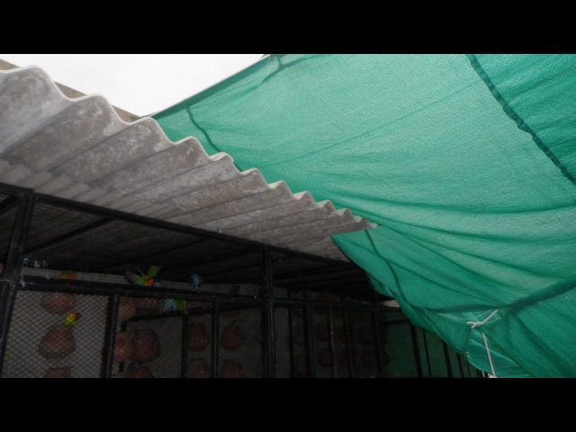 Birds Ko Dhoop (Direct Sunlight) Ki Kitni Zarorat Hoti Hai