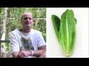 Зелень на сыроедении Есть или не есть Доктор Дуглас Грэм автор книги Диета 80 10 10