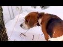 Собаки в Ржевском лесопарке