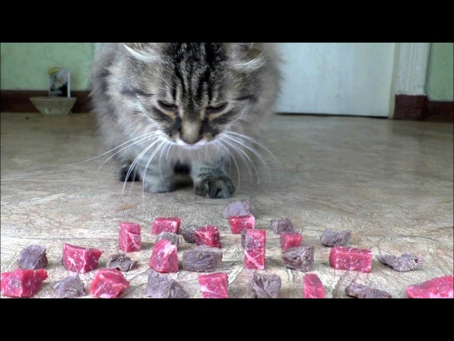 Raw or boiled beef meat What does the cat like to eat