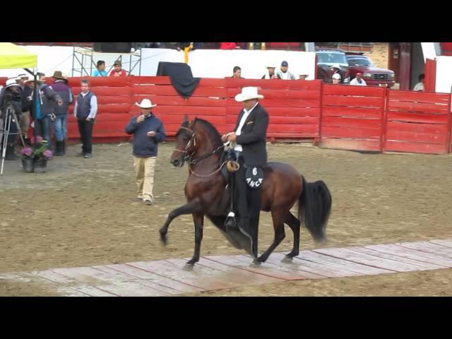 Campeonato de caballos trote y galope. Sibaté Cundinamarca