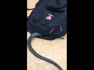 Змейка няшка