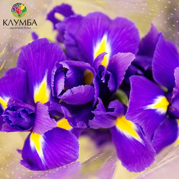 Клумба цветы оптом казань
