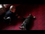 Видео-урок: игра с котом :)