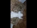 Кот Тиша на релаксе