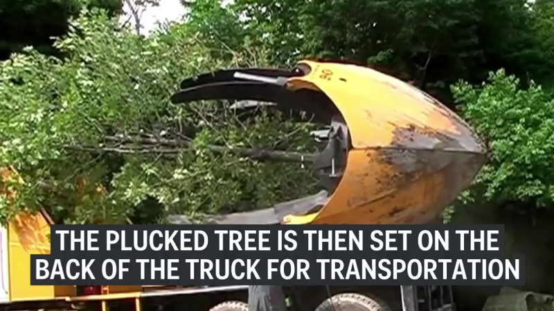 This monster machine uproots trees without damaging...