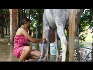 A Girl And A Horse _ How To Teach Your Horse Lay Down _ Horse Training By A Girl And Owner