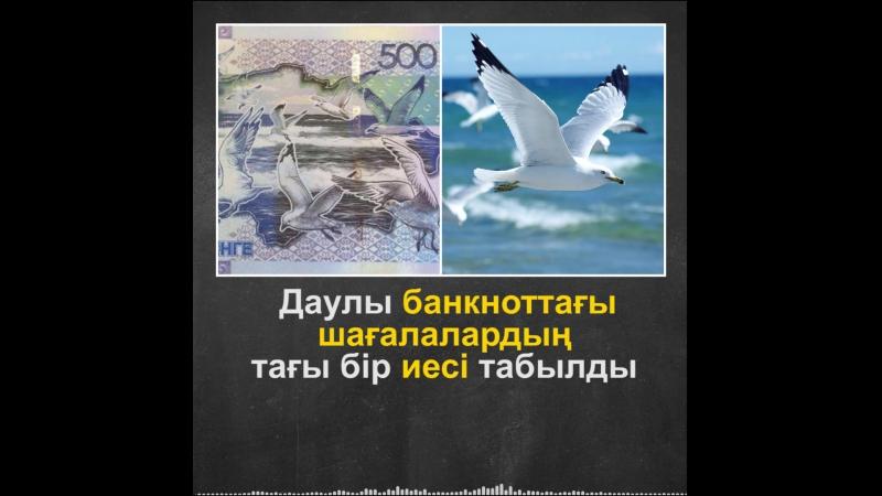 Даулы банкноттағы шағаланың тағы бір иесі табылды