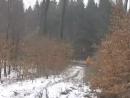 flying girl in russian wood
