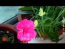 Истории деревенского паренька Чжан Дэйонга. В поисках невесты! Зимний сад для любимой...
