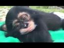 şirin bir maymun
