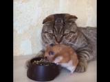 Дружба кота и хомяка