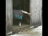 Когда оделся не по погоде, но все равно хочется погулять)))