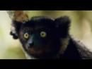 Мадагаскар и Винни Пух