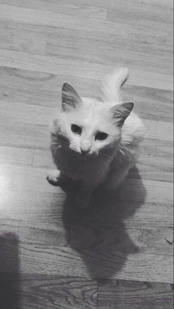 🆘Пропал кот в районе авдотьино, прошу вернуть за вознаграждение 😭❤️🆘 8