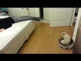 Реакция кошки на фейковую смерть