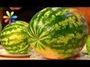 Правила выбора арбуза без нитратов от эксперта по качеству Андрея Бабаева (повтор)