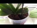 мой самый простой уход за орхидеями