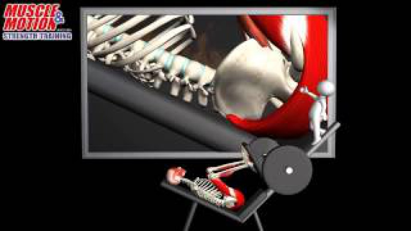 Leg Press Common Mistake Muscle and Motion