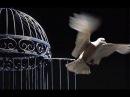 Павел Бороденко. Демонология и освобождение- 3 (заключительная)