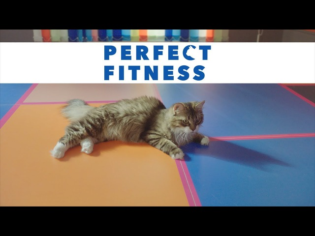 PERFECT FITNESS - как FITNESS, только PERFECT!